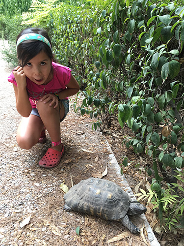 Wild tortoise in the national park